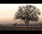 arbre dénudés.jpg